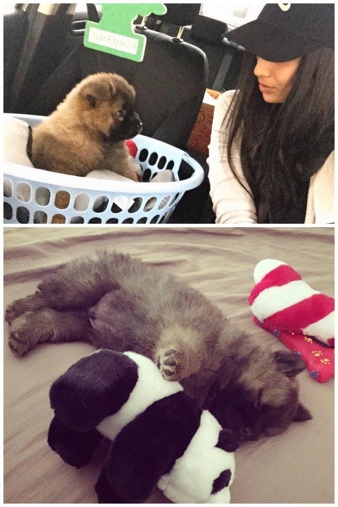 Niki and Panda